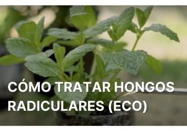 PROTECCIÓN (eco) frente a HONGOS DE LA RAÍZ para tu huerto